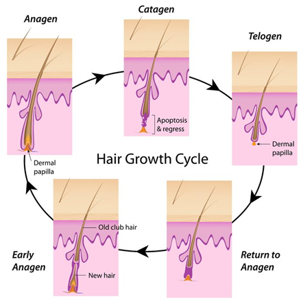 dauerhafte Haarentfernung Ganderkesee